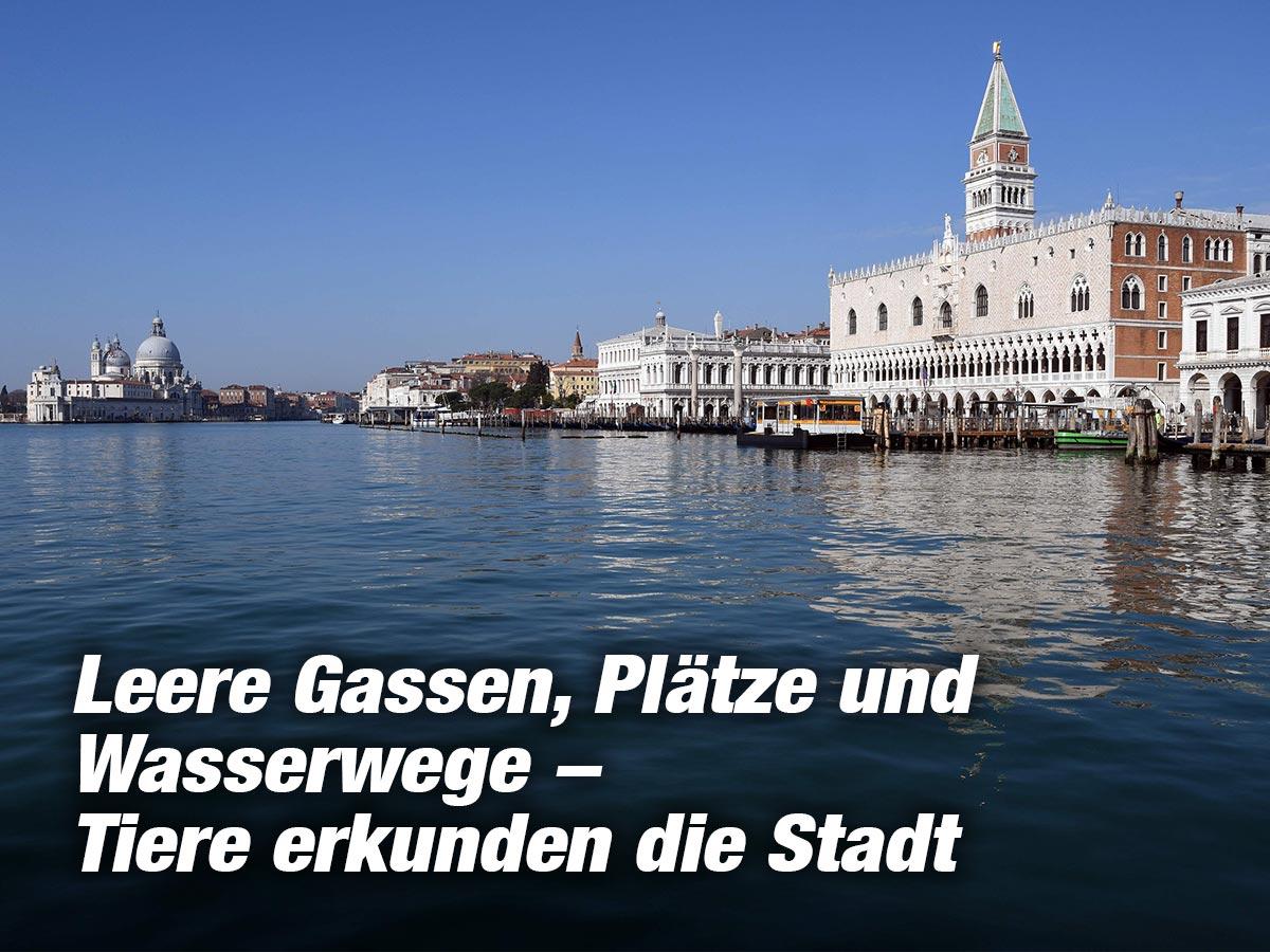 Wasser Venedig Sauber
